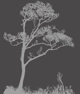 Shadowed tree