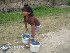 Suli in the Blueberry Field
