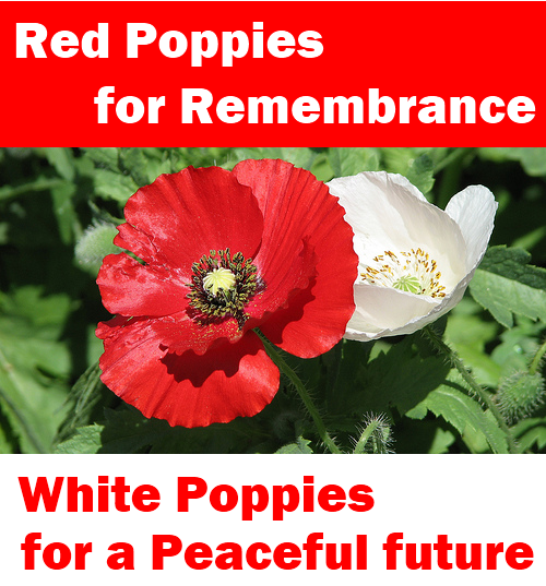 whiteredpoppies1