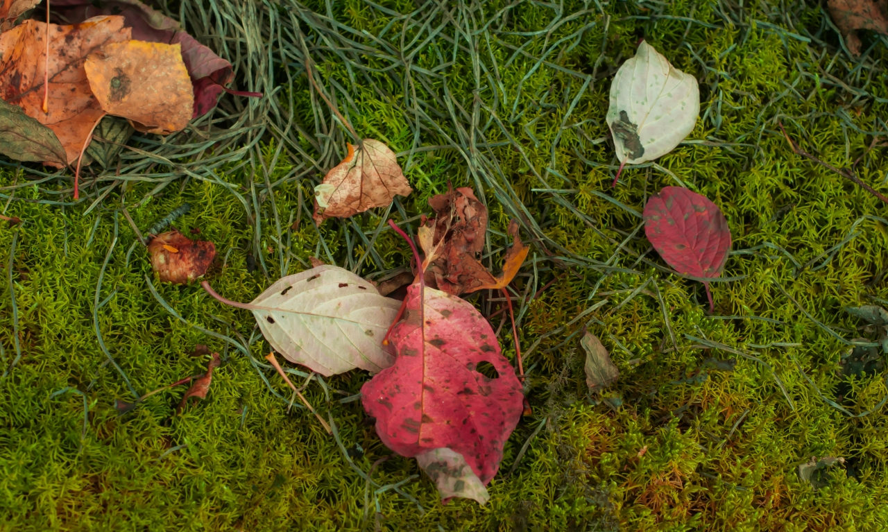 red-leaf-green-moss
