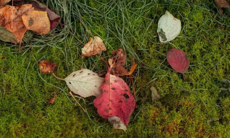red-leaf-green-moss