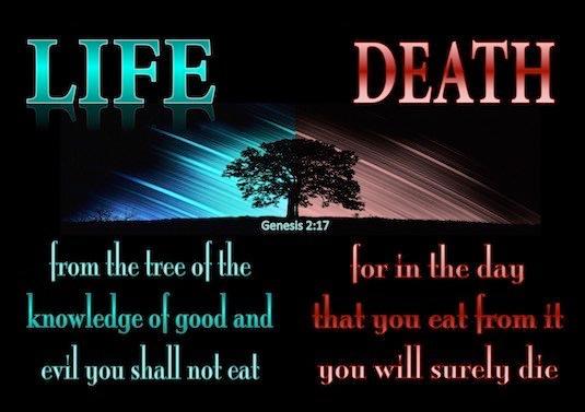 Genesis-1-27-Tree-of-Knowledge-of-Good-and-Evil-aqua-copy