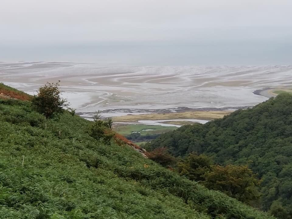View of sea estuary behind large forested hills
